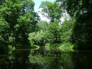 bos met water